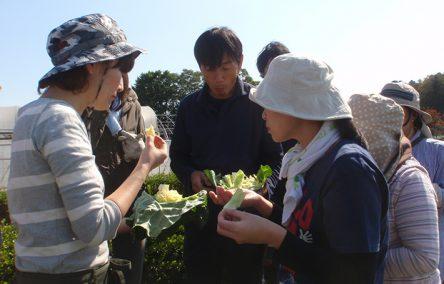採れたて野菜を楽しむ