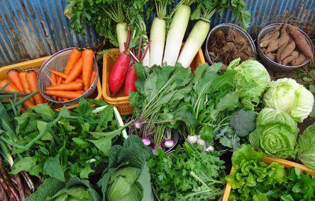 有機野菜をお持ち帰り